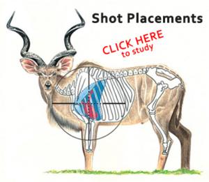 SHOT PLACEMENTS