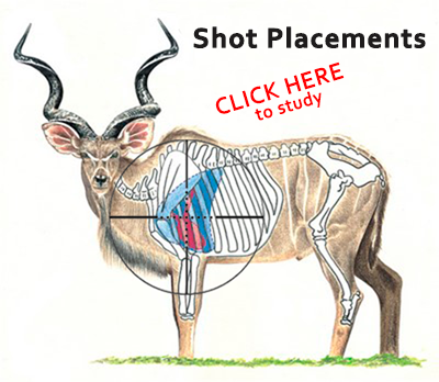 SHOT PLACEMENTS